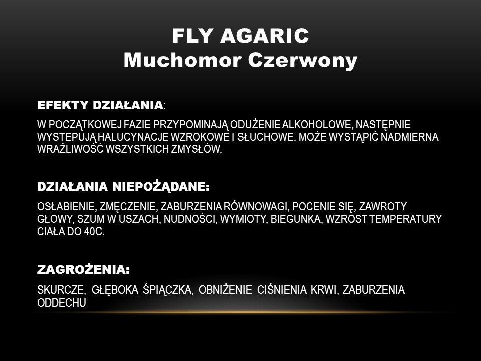 FLY AGARIC Muchomor Czerwony