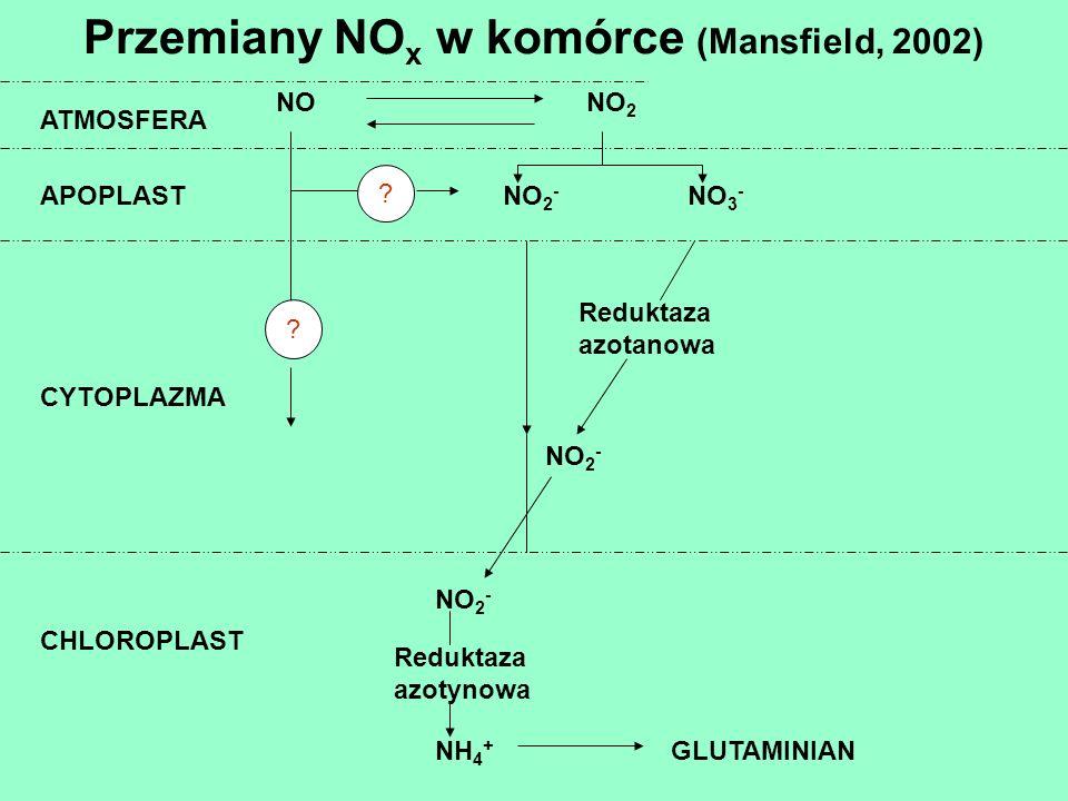 Przemiany NOx w komórce (Mansfield, 2002)