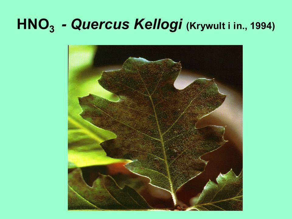 HNO3 - Quercus Kellogi (Krywult i in., 1994)