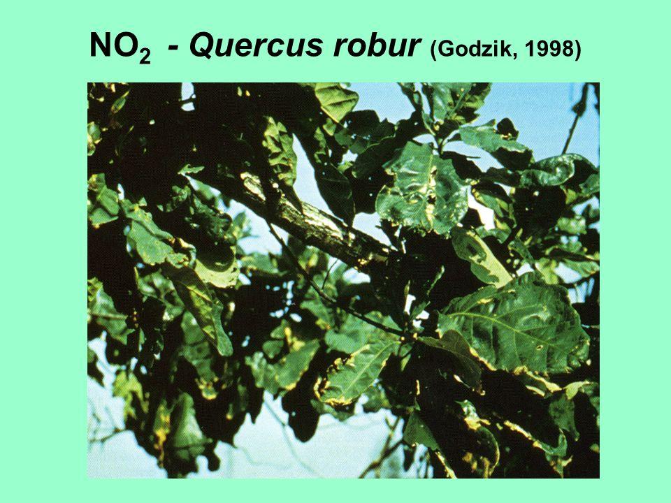 NO2 - Quercus robur (Godzik, 1998)