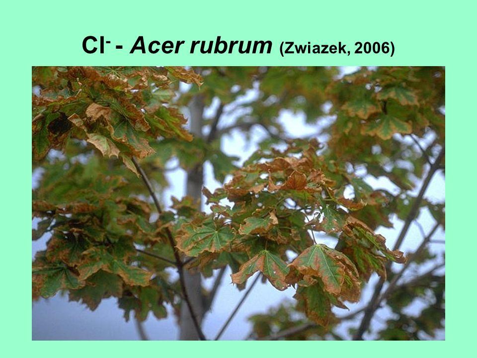 Cl- - Acer rubrum (Zwiazek, 2006)