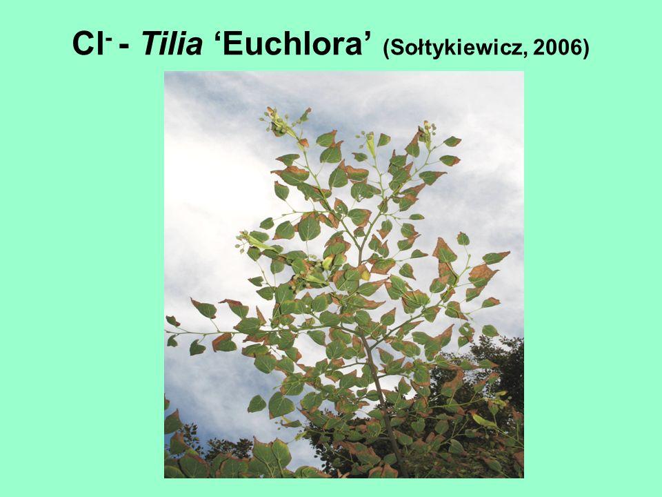 Cl- - Tilia 'Euchlora' (Sołtykiewicz, 2006)