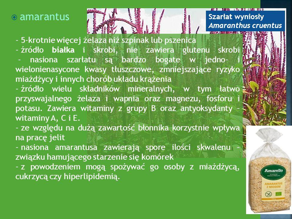 amarantus 5-krotnie więcej żelaza niż szpinak lub pszenica