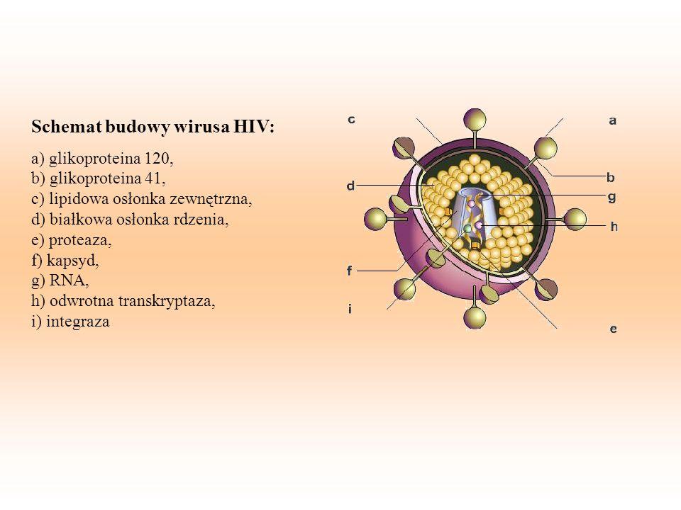 Schemat budowy wirusa HIV: a) glikoproteina 120, b) glikoproteina 41, c) lipidowa osłonka zewnętrzna, d) białkowa osłonka rdzenia, e) proteaza, f) kapsyd, g) RNA, h) odwrotna transkryptaza, i) integraza