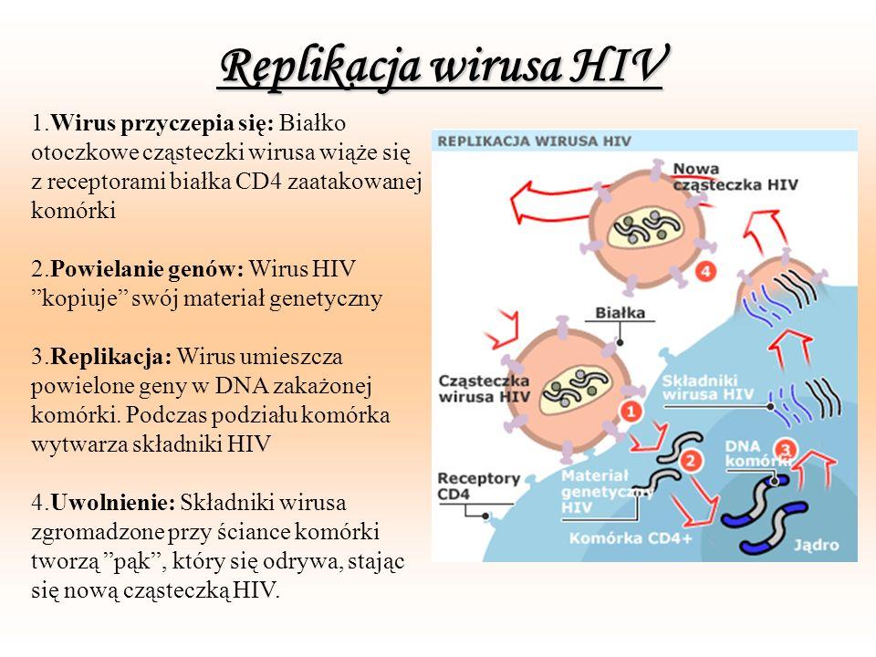 Replikacja wirusa HIV1.Wirus przyczepia się: Białko otoczkowe cząsteczki wirusa wiąże się z receptorami białka CD4 zaatakowanej komórki.
