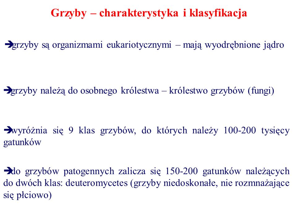 Grzyby – charakterystyka i klasyfikacja