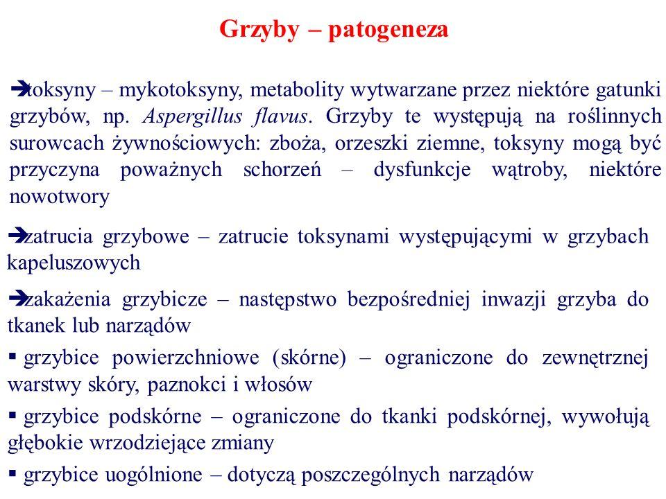 Grzyby – patogeneza