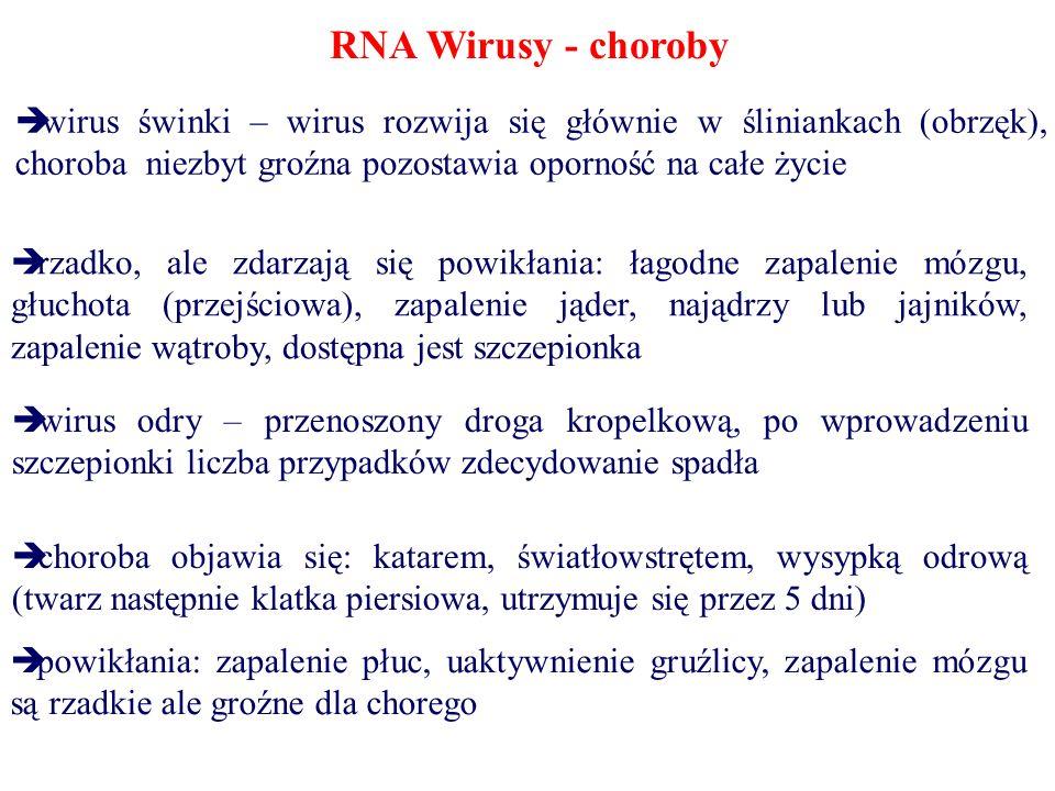 RNA Wirusy - choroby wirus świnki – wirus rozwija się głównie w śliniankach (obrzęk), choroba niezbyt groźna pozostawia oporność na całe życie.