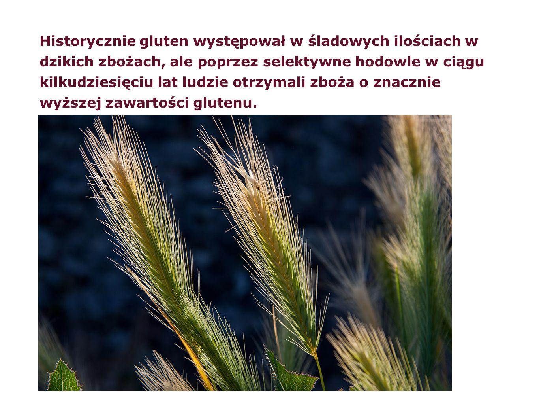Historycznie gluten występował w śladowych ilościach w dzikich zbożach, ale poprzez selektywne hodowle w ciągu kilkudziesięciu lat ludzie otrzymali zboża o znacznie wyższej zawartości glutenu.