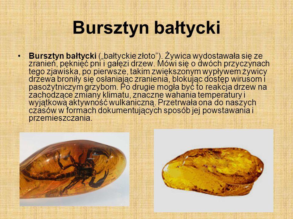 Bursztyn bałtycki