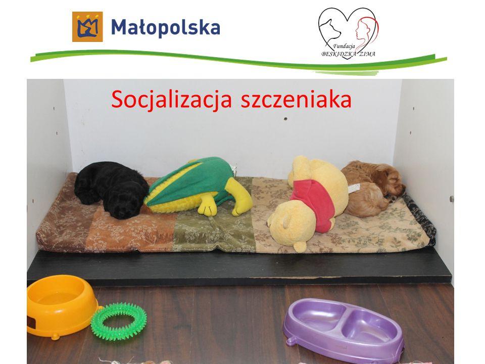 Socjalizacja szczeniaka