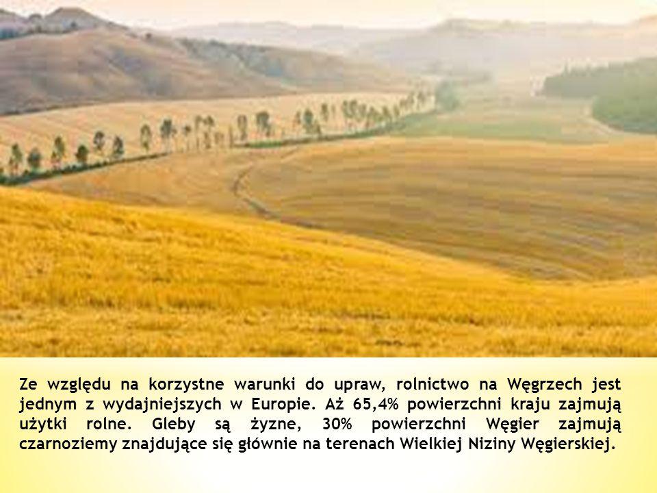 Ze względu na korzystne warunki do upraw, rolnictwo na Węgrzech jest jednym z wydajniejszych w Europie.