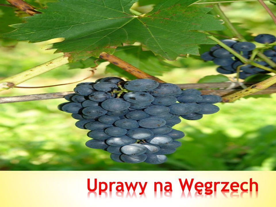 Uprawy na Węgrzech