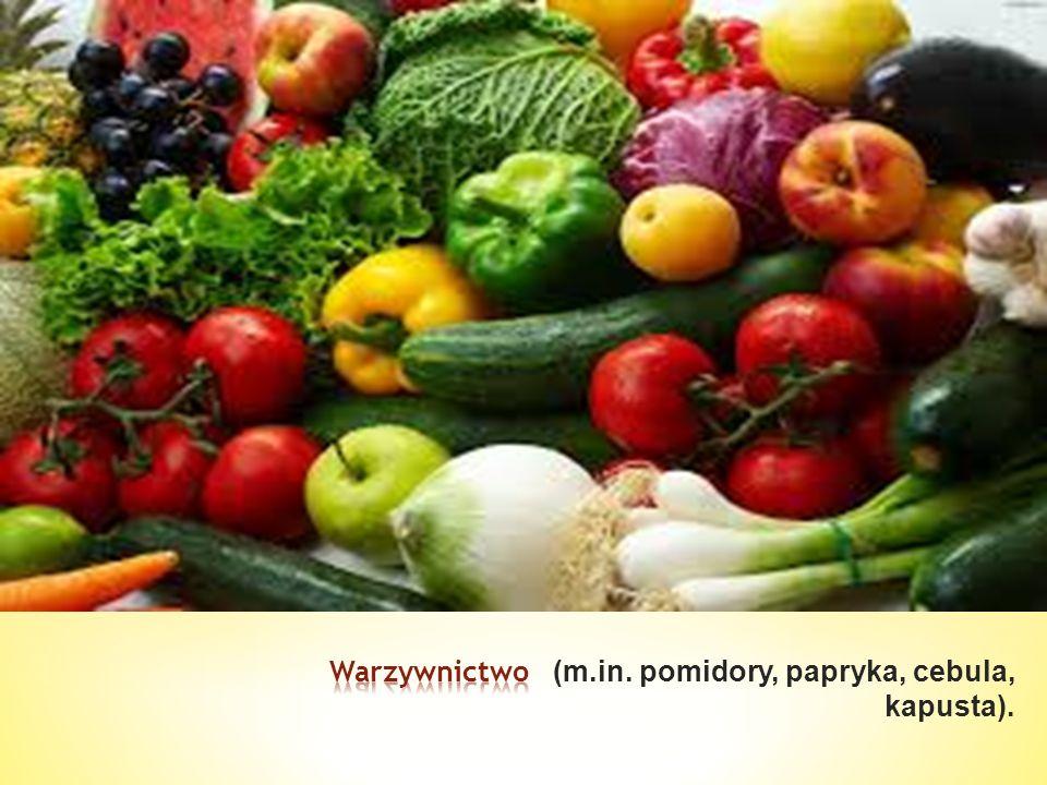 Warzywnictwo (m.in. pomidory, papryka, cebula, kapusta).