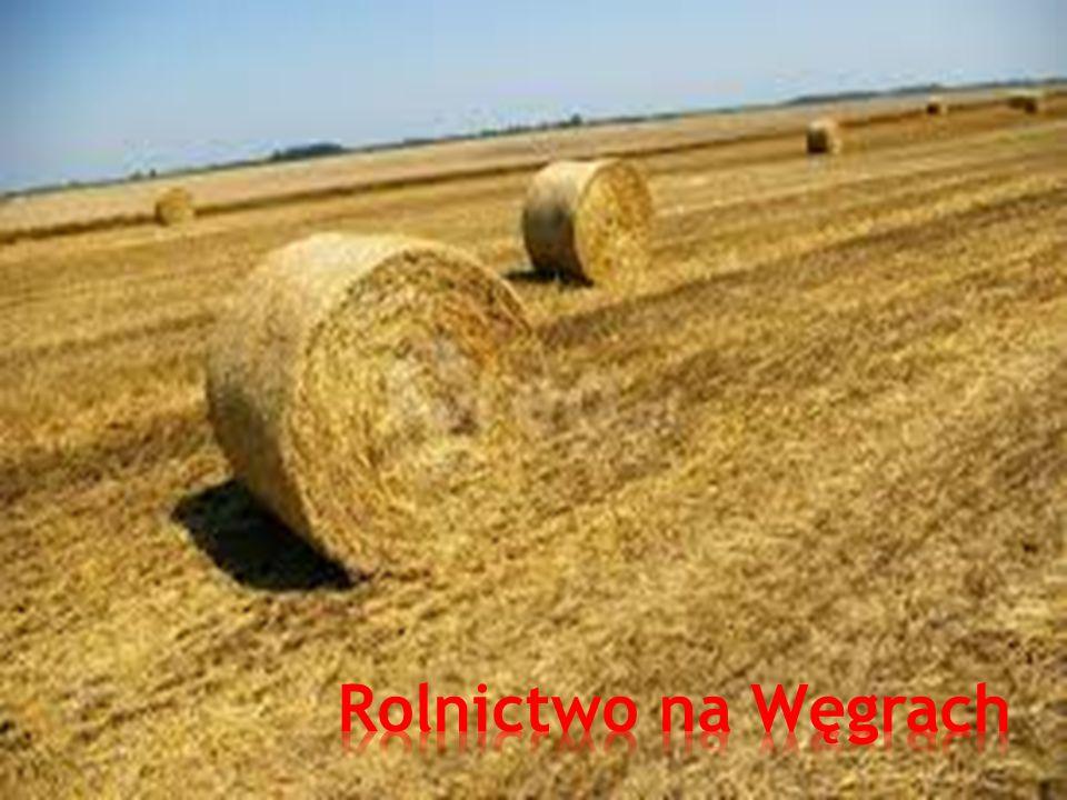 Rolnictwo na Węgrach