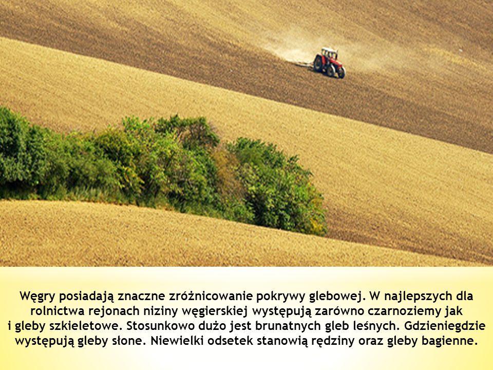 Węgry posiadają znaczne zróżnicowanie pokrywy glebowej