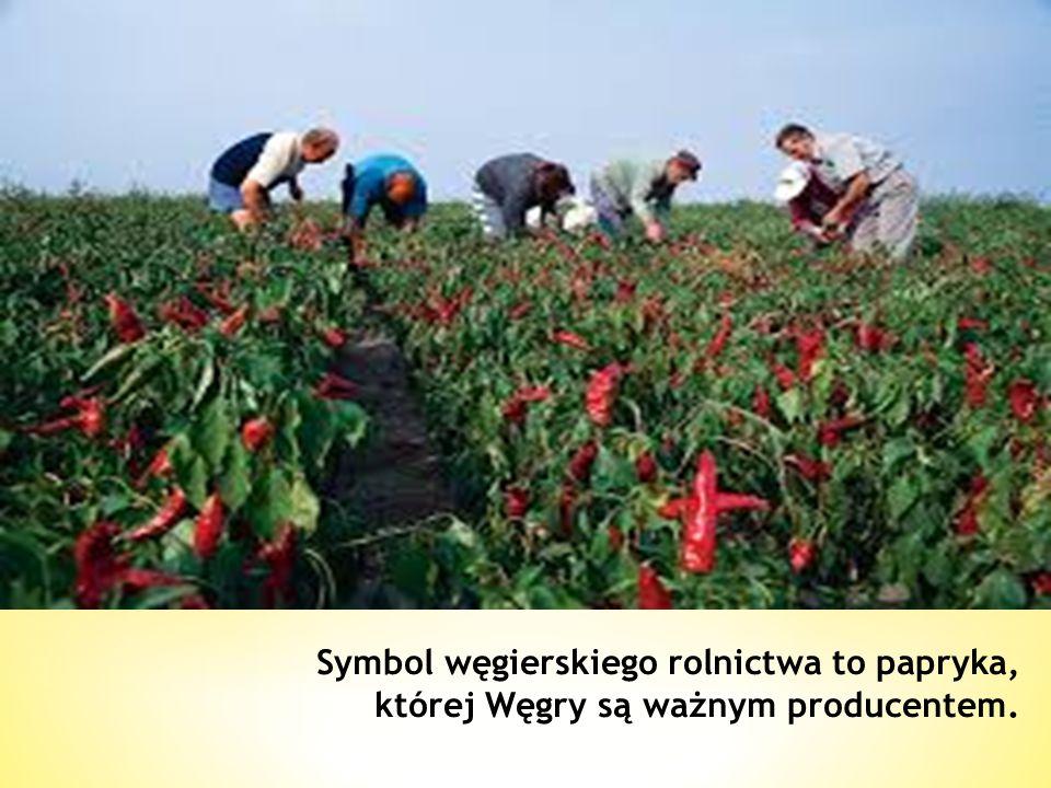 Symbol węgierskiego rolnictwa to papryka, której Węgry są ważnym producentem.