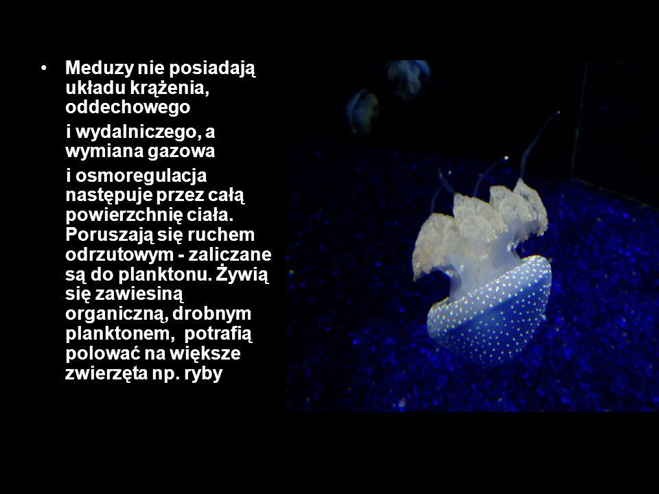 Meduzy nie posiadają układu krążenia, oddechowego