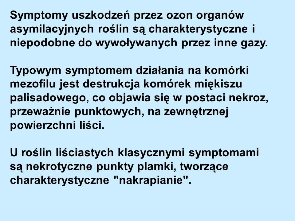 Symptomy uszkodzeń przez ozon organów asymilacyjnych roślin są charakterystyczne i niepodobne do wywoływanych przez inne gazy.