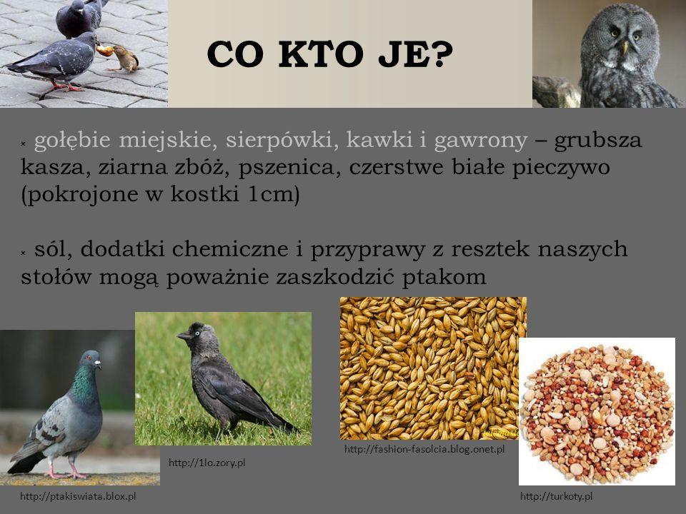 CO KTO JE gołębie miejskie, sierpówki, kawki i gawrony – grubsza kasza, ziarna zbóż, pszenica, czerstwe białe pieczywo (pokrojone w kostki 1cm)