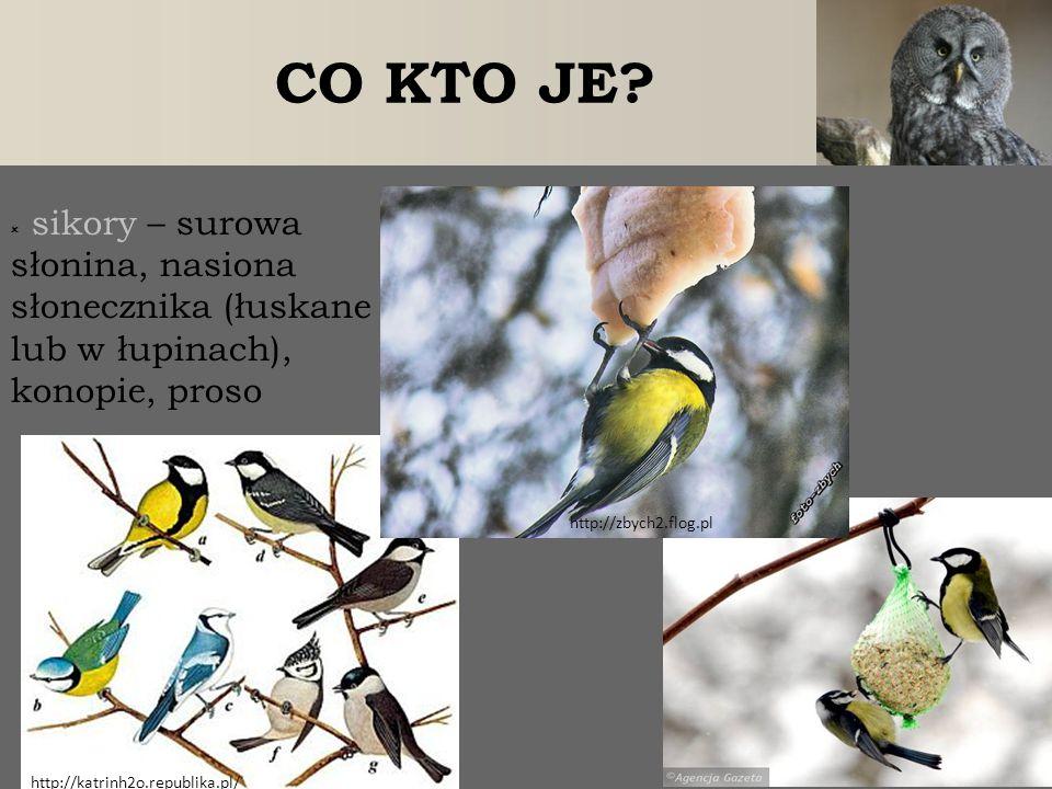 CO KTO JE sikory – surowa słonina, nasiona słonecznika (łuskane lub w łupinach), konopie, proso. http://zbych2.flog.pl.