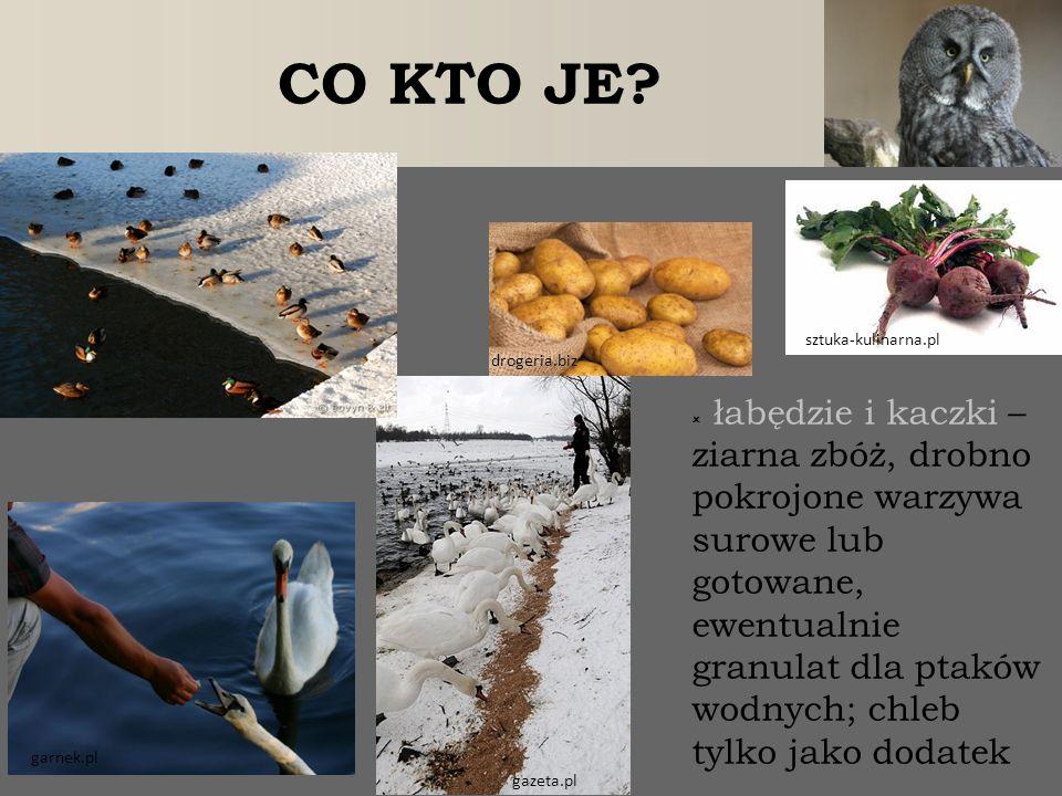 CO KTO JE sztuka-kulinarna.pl. drogeria.biz.