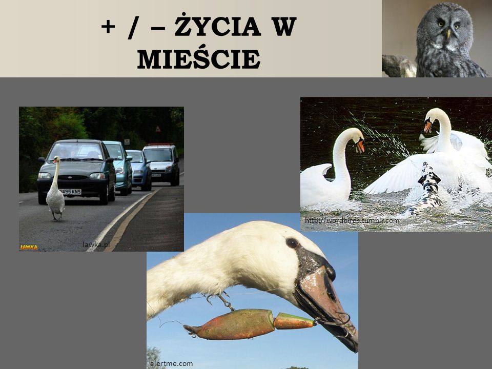 + / – ŻYCIA W MIEŚCIE http://wordbirds.tumblr.com lawka.pl alertme.com