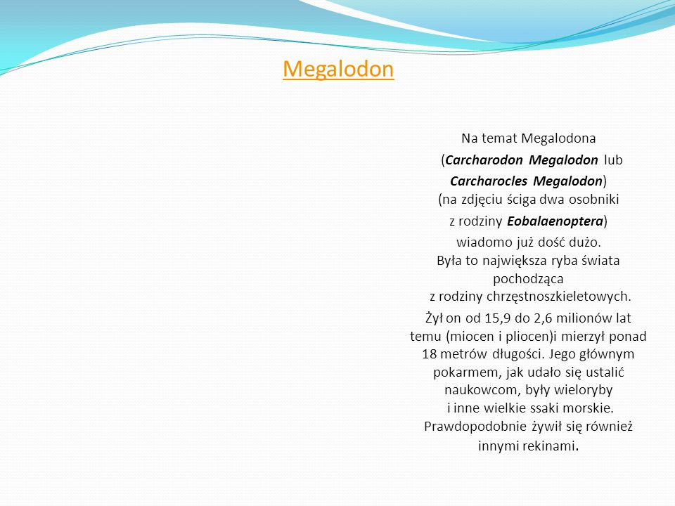 Megalodon Na temat Megalodona (Carcharodon Megalodon lub