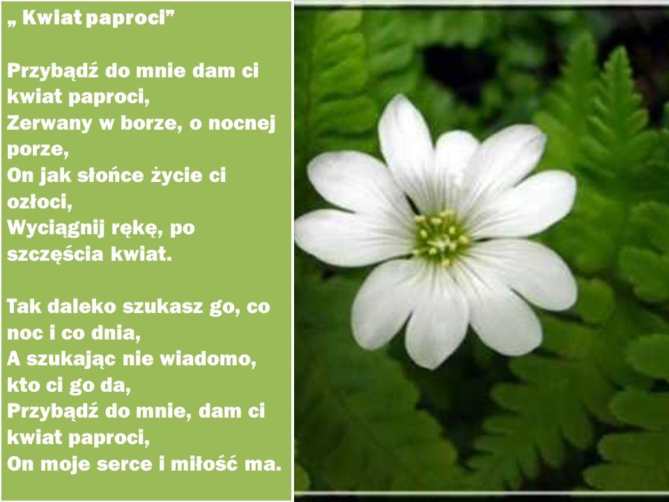 """"""" Kwiat paproci Przybądź do mnie dam ci kwiat paproci, Zerwany w borze, o nocnej porze, On jak słońce życie ci ozłoci,"""