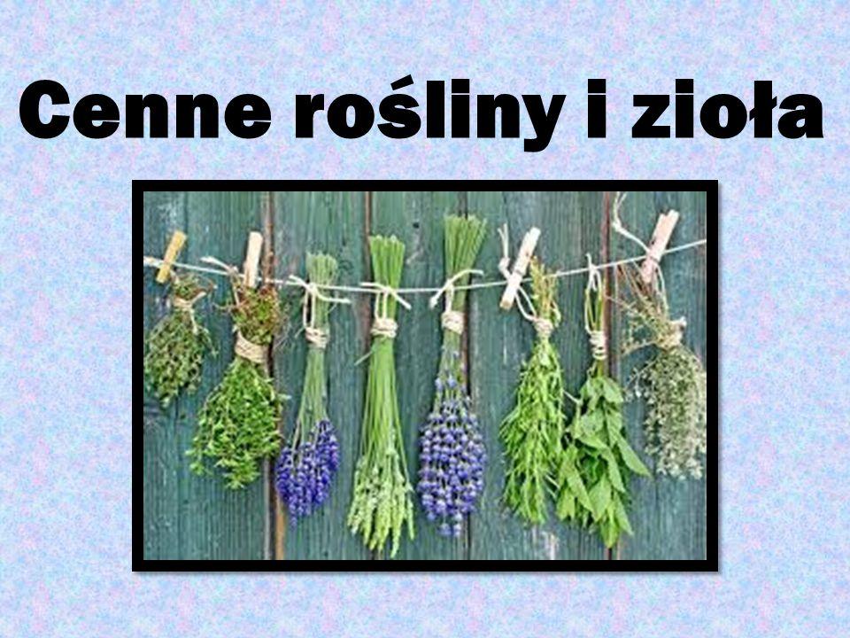 Cenne rośliny i zioła