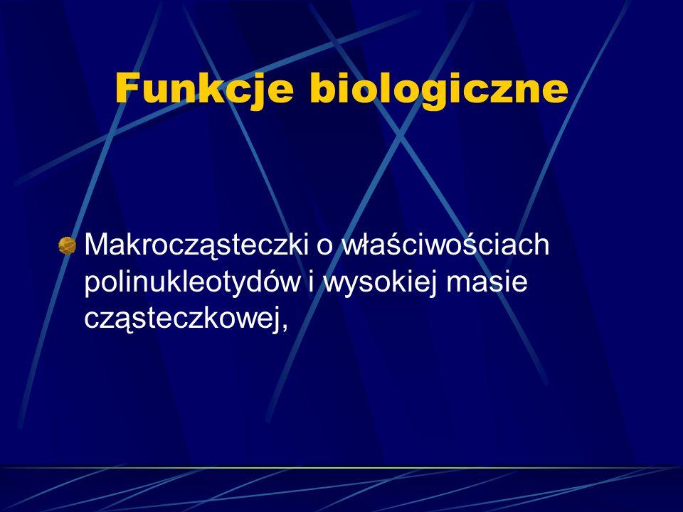 Funkcje biologiczneMakrocząsteczki o właściwościach polinukleotydów i wysokiej masie cząsteczkowej,