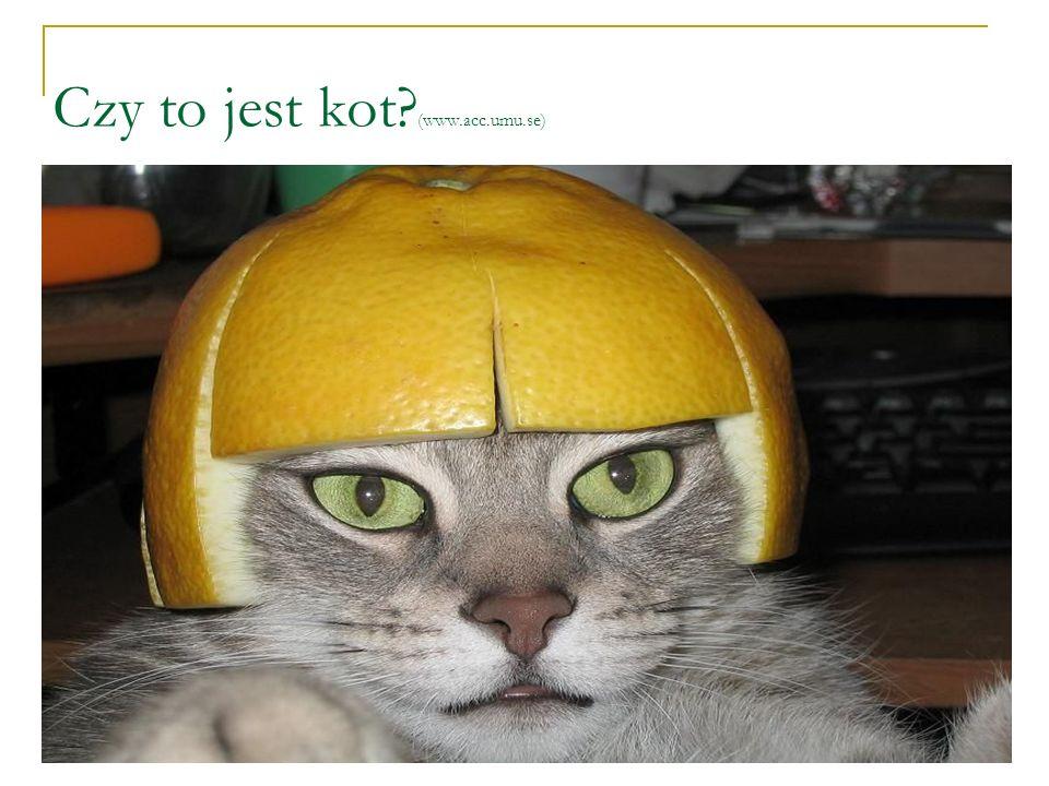 Czy to jest kot (www.acc.umu.se)