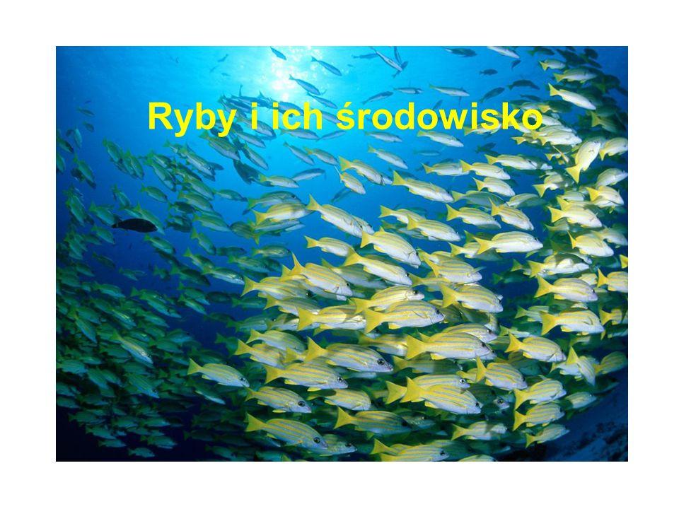 Ryby i ich środowisko
