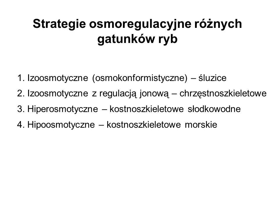Strategie osmoregulacyjne różnych gatunków ryb