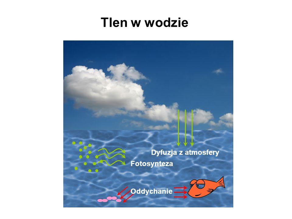 Tlen w wodzie Dyfuzja z atmosfery Fotosynteza Oddychanie