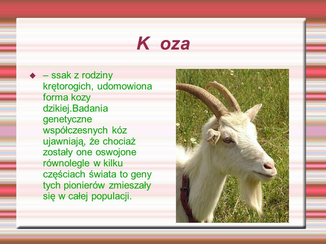 K oza