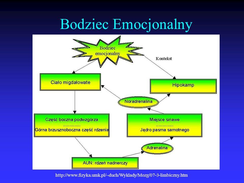 Bodziec Emocjonalny http://www.fizyka.umk.pl/~duch/Wyklady/Mozg/07-3-limbiczny.htm
