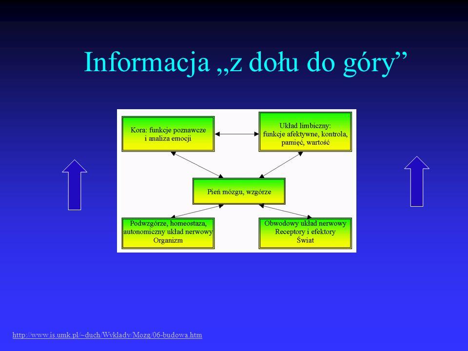 """Informacja """"z dołu do góry"""