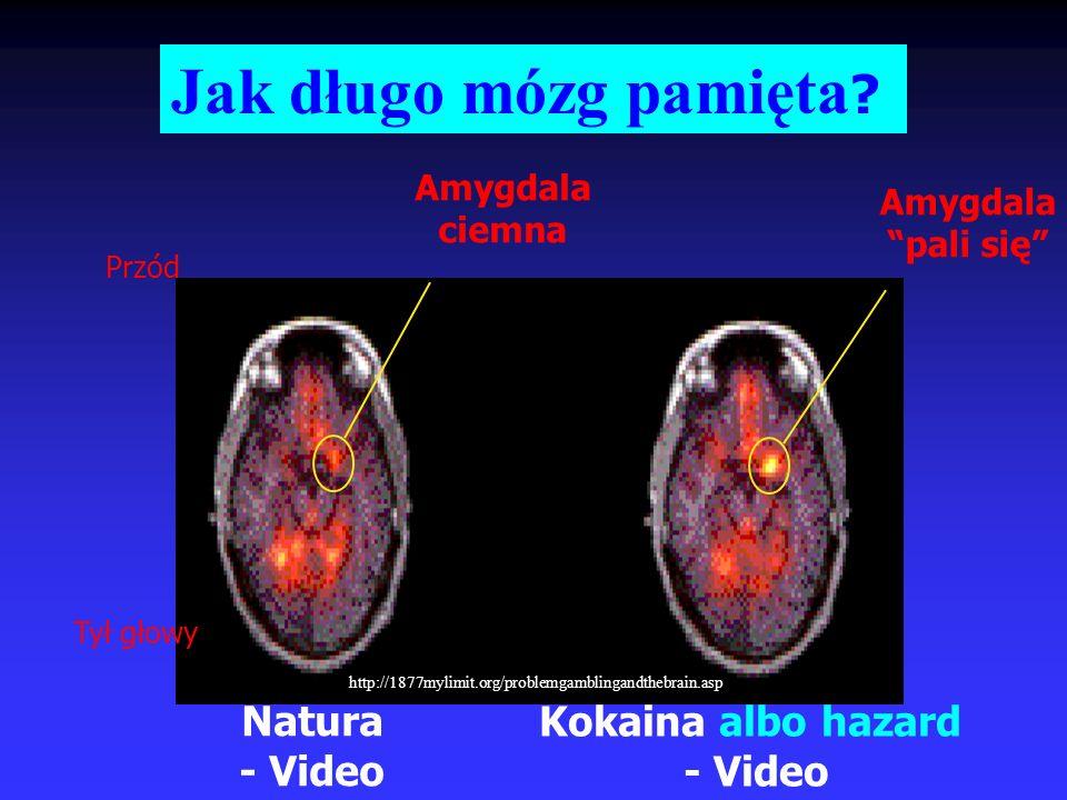 Jak długo mózg pamięta Natura - Video Kokaina albo hazard