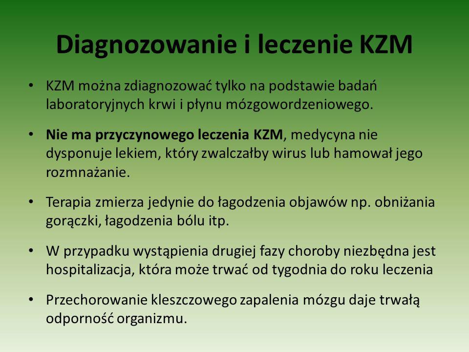 Diagnozowanie i leczenie KZM