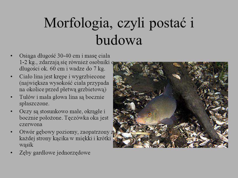 Morfologia, czyli postać i budowa