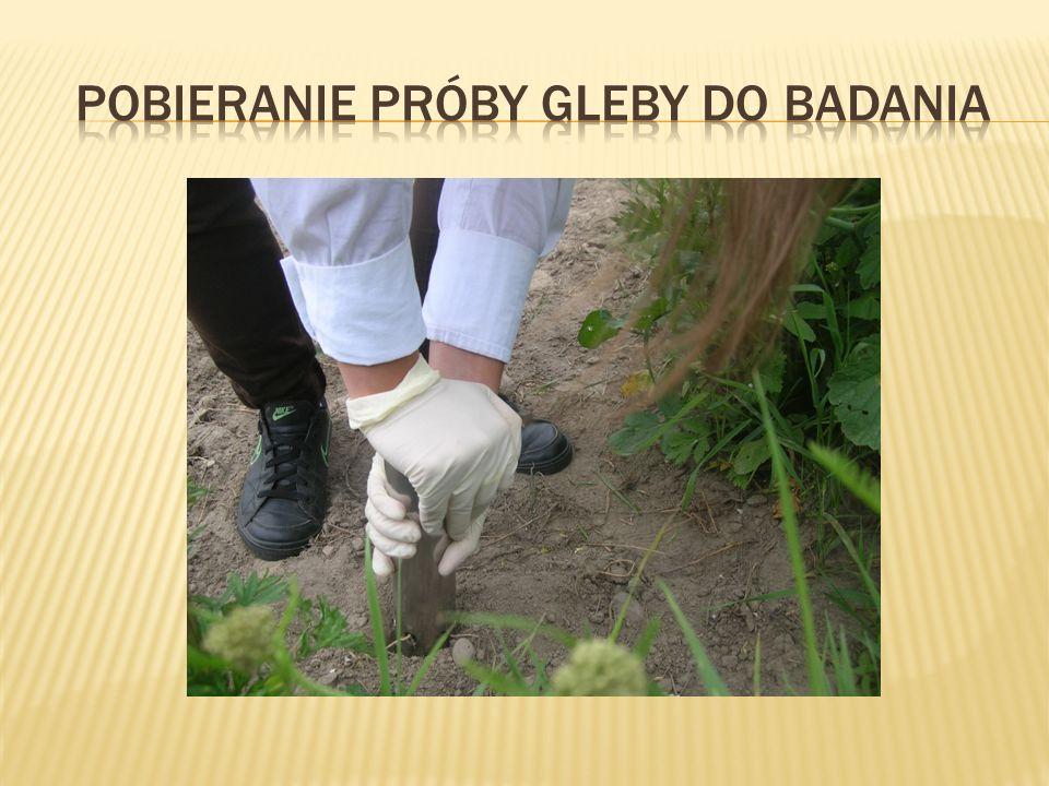 Pobieranie próby gleby do badania