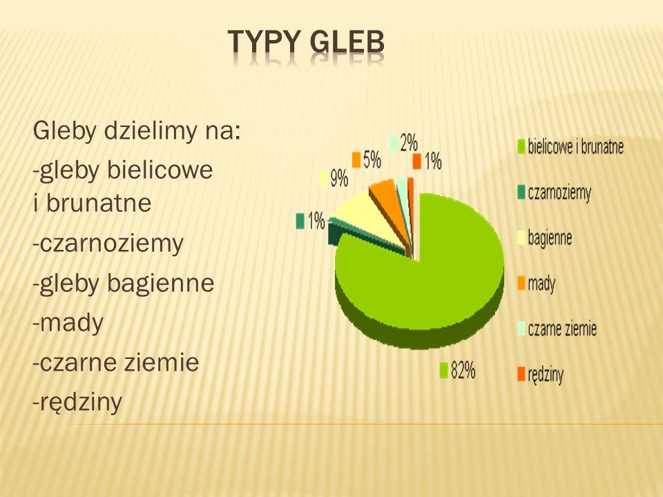 Typy gleb Gleby dzielimy na: -gleby bielicowe i brunatne -czarnoziemy