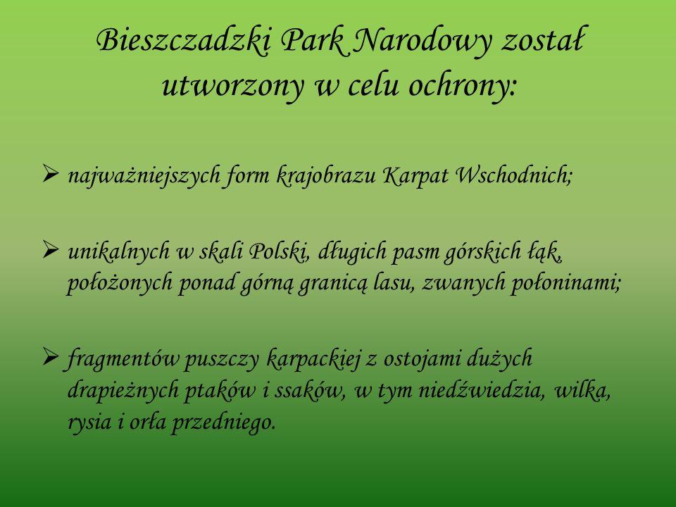 Bieszczadzki Park Narodowy został utworzony w celu ochrony: