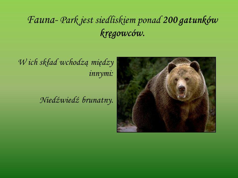 Fauna- Park jest siedliskiem ponad 200 gatunków kręgowców.