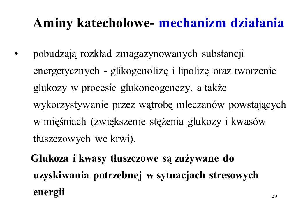 Aminy katecholowe- mechanizm działania