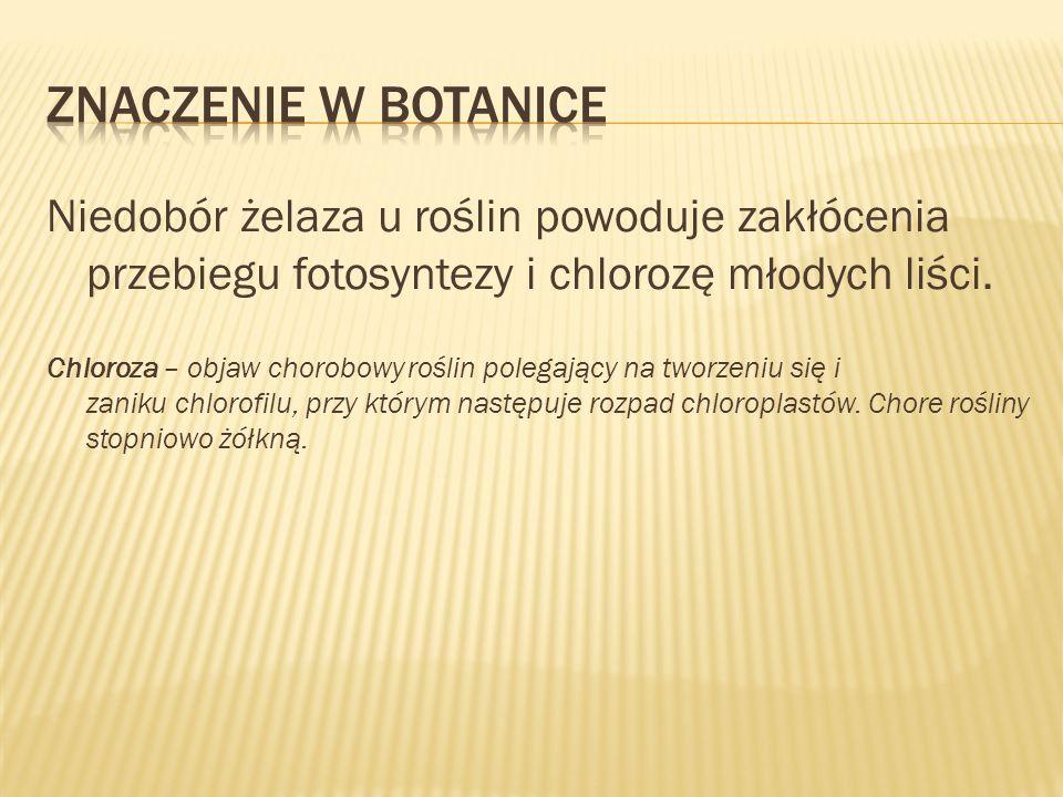 Znaczenie w botaniceNiedobór żelaza u roślin powoduje zakłócenia przebiegu fotosyntezy i chlorozę młodych liści.