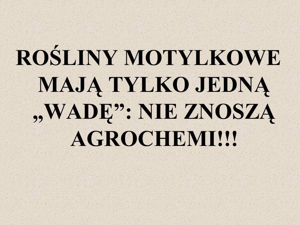 """ROŚLINY MOTYLKOWE MAJĄ TYLKO JEDNĄ """"WADĘ : NIE ZNOSZĄ AGROCHEMI!!!"""