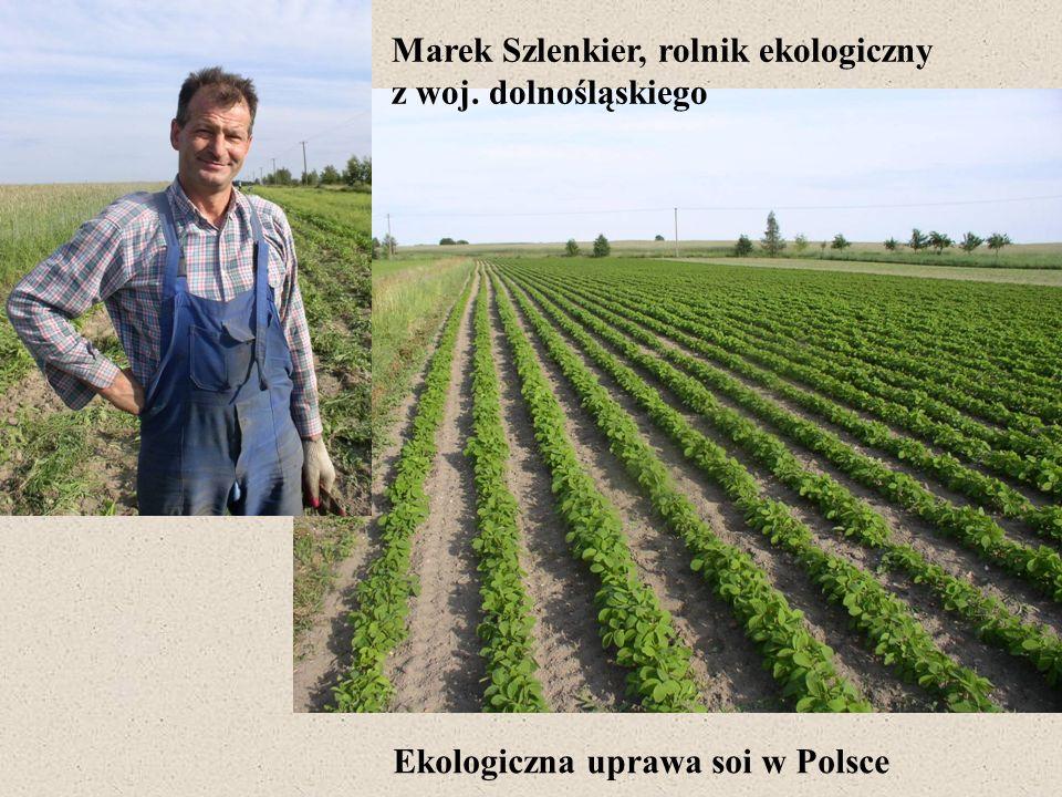 Ekologiczna uprawa soi w Polsce