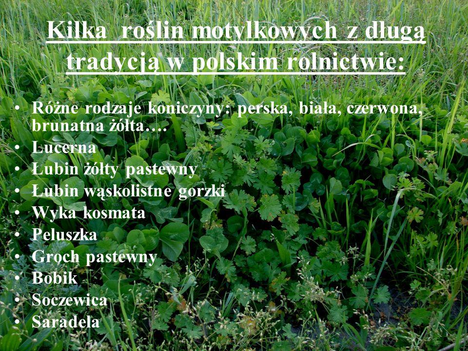 Kilka roślin motylkowych z długą tradycją w polskim rolnictwie: